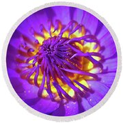 Purple Water Lily Macro Round Beach Towel