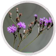 Purple Wildflower In Shiloh National Military Park, Tennessee Round Beach Towel