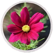 Purple Wood Aster  Round Beach Towel
