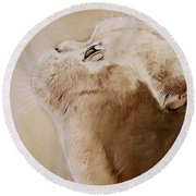 Purty Face Round Beach Towel