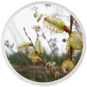 Pussy Willow Blossoms Round Beach Towel