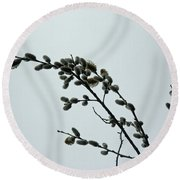Pussy Willow Catkins Round Beach Towel