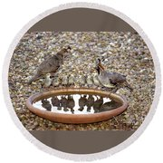 Quail Family Gathering Az Round Beach Towel