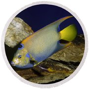 Queen Angelfish Round Beach Towel