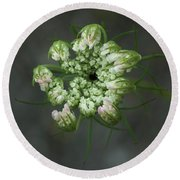 Queen Anne's Lace In Waiting Round Beach Towel