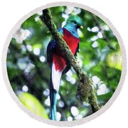 Quetzal In Monteverde Round Beach Towel