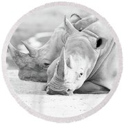 Rhino Quiet Moment Round Beach Towel
