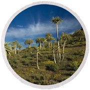 Quiver Tree Forest Round Beach Towel