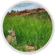 Rabbit In The Grass Round Beach Towel