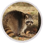 Raccoon #4 Round Beach Towel
