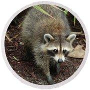 Raccoon Bandit Round Beach Towel