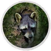 Raccoon In A Log Round Beach Towel