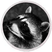 Raccoon Looking Round Beach Towel