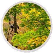 Racoon In Fall Trees Round Beach Towel