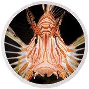 radial Lionfish Pterois radiata Round Beach Towel