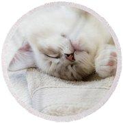 Ragdoll Kitten Asleep Round Beach Towel