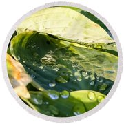 Rain Collecting On Hosta Leaves Round Beach Towel