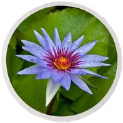 Rain Drenched Blue Lotus In Grand Cayman Round Beach Towel