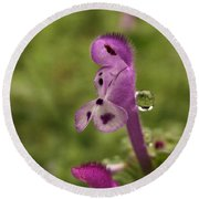 Rain Drop Olympics On Dead Nettle Flower Round Beach Towel