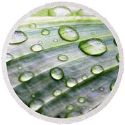 Rain Drops On A Leaf Round Beach Towel
