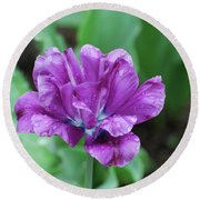 Raindrops Clinging To The Purple Petals Of A Tulip Round Beach Towel