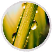 Raindrops On A Blade Of Grass Round Beach Towel