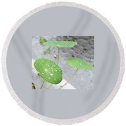 Raindrops On A Nasturtium Leaf Round Beach Towel