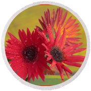 Raindrops On Gerbera Round Beach Towel