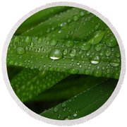 Raindrops On Green Leaves Round Beach Towel by Carol Groenen