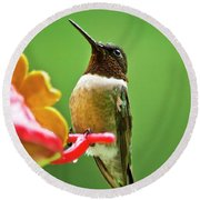 Rainy Day Hummingbird Round Beach Towel