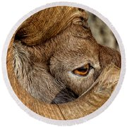 Ram Detail Round Beach Towel