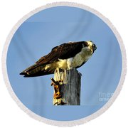 Raptor's Stare Round Beach Towel