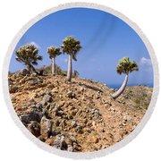 Rare Palm Tress Curacao Round Beach Towel
