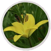 Really Beautiful Yellow Lily Growing In Nature Round Beach Towel