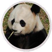 Really Cute Giant Panda Bear With Bamboo Round Beach Towel