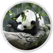 Really Cute Panda Bear Sleeping On A Log Round Beach Towel