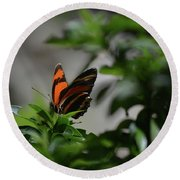 Really Elegant Oak Tiger Butterfly In Nature Round Beach Towel
