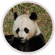 Really Great Panda Bear Chomping On A Fistful Of Bamboo Round Beach Towel