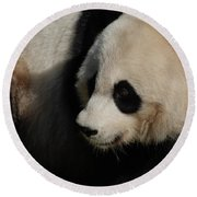 Really Up Close With The Face Of A Giant Panda Round Beach Towel