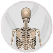 Rear View Of Human Skeletal System Round Beach Towel