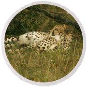 Reclining Cheetah Profile Round Beach Towel