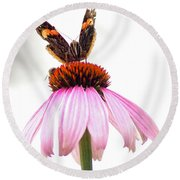 Red Admiral On Echinacea Round Beach Towel