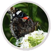 Red Admiral - Underside Round Beach Towel