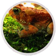 Red American Toad Round Beach Towel