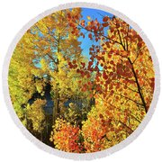 Red And Golden Aspens In Dillon Co Round Beach Towel