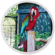 Red  And  Green Macaw         Zoo      Indiana Round Beach Towel