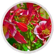 Red And White Columbine At Pilgrim Place In Claremont-california Round Beach Towel