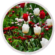 Red And White Tulips With Red And Pink English Daisies In Spring Round Beach Towel