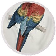 Red And Yellow Macaw  Round Beach Towel