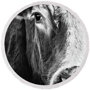 Red Angus In Black And White  Round Beach Towel